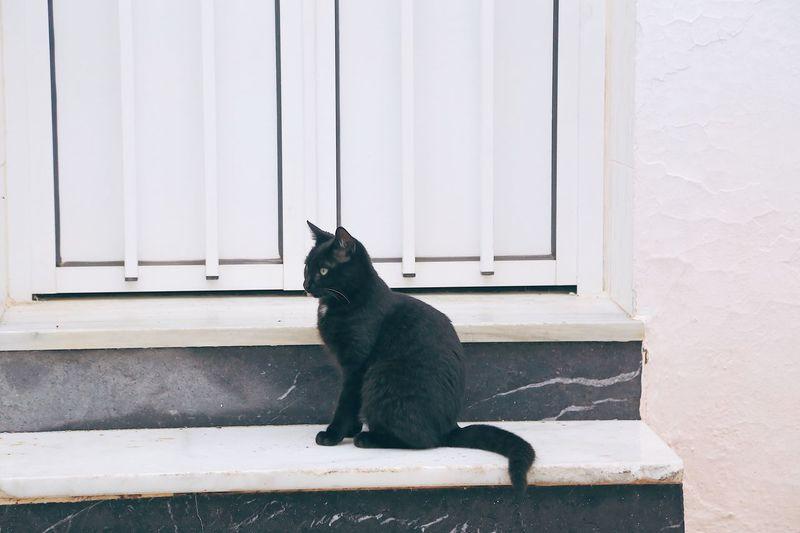 Black cat sitting on window