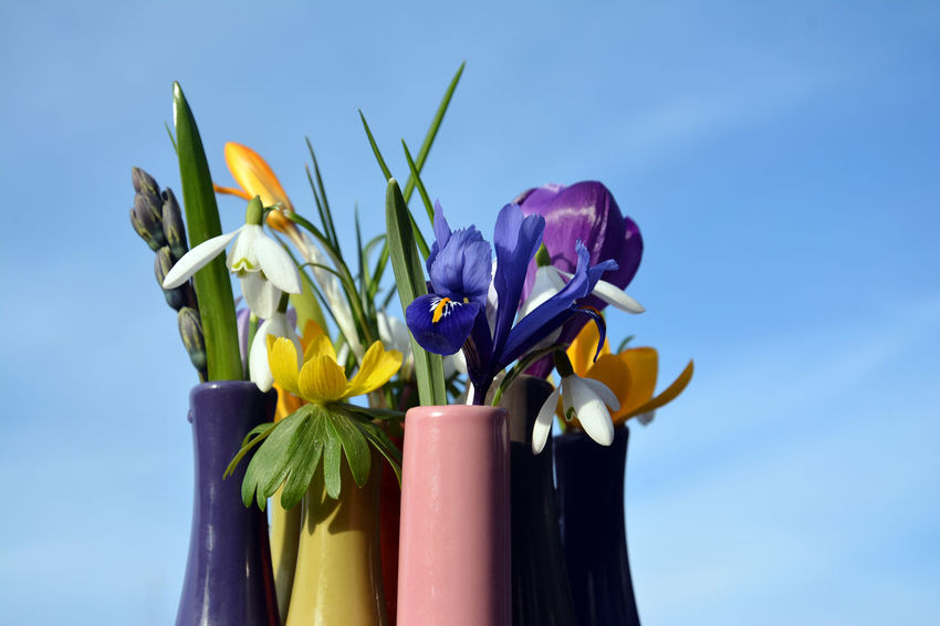 Small vase with spring flowers Blooming Blue Sky Close-up Colourful Crocus Day Eranthis Hyemalis Flower Flower Head Fragility Freshness Growth Nature No People Outdoors Petal Plant Sky Snowdrop Spring Spring Flowers Springtime Vase Vase Of Flowers Winter Aconite