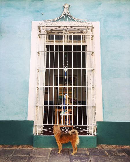 A very curious dog stopped to have a look ! Cuba Trinidad Dog Animal Curious Taking Photos Window Looking To The Other Side Taking Photos Architectural Detail Architecture Cityscapes City Life Urbanphotography Eye4photography  IPhoneography Travel Photography No People
