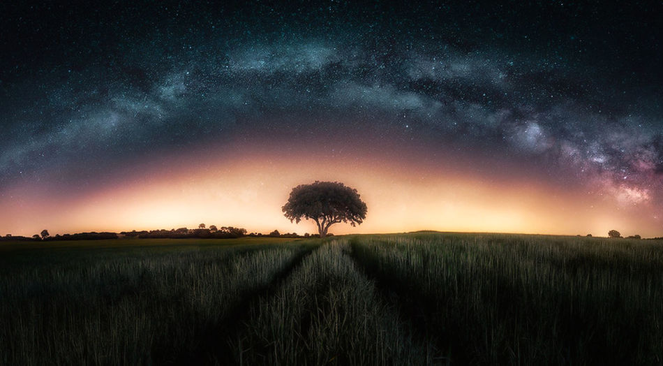 Field Plant Scenics - Nature Land Environment Beauty In Nature Landscape Tranquility Sky Tranquil Scene Night Growth Tree Nature Astronomy Star - Space Grass No People Rural Scene Space Outdoors Dark Milky Way
