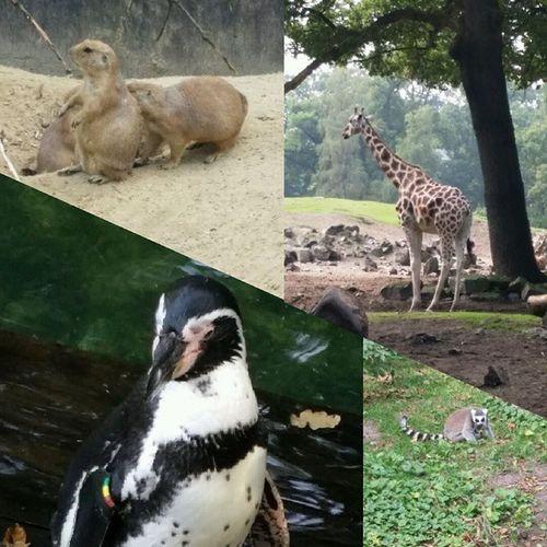 animal themes