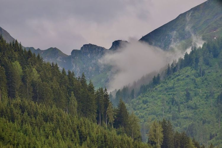 Panoramic view of trees and mountains with rising fog against sky
