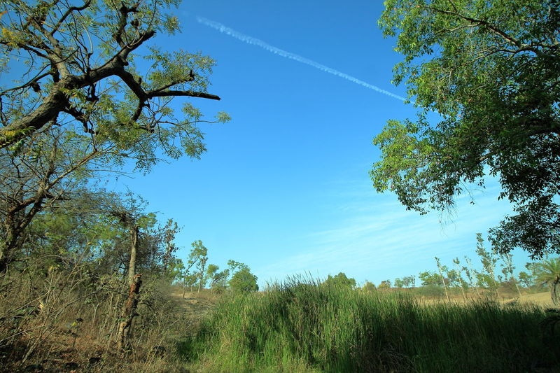 Beauty In Nature Blue Blue Sky Cloud - Sky Day Growth Land Nature No People Non-urban Scene Outdoors Plant Scenics - Nature Sky Tranquil Scene Tranquility Tree
