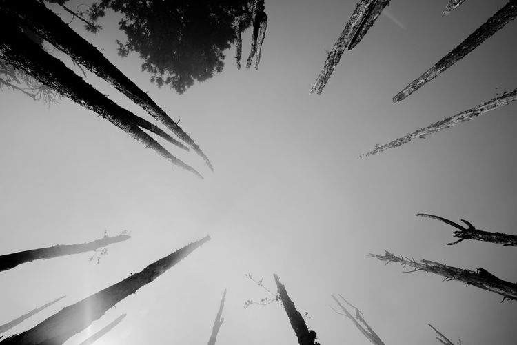 tree memories series Architecture Beauty In Nature Blackandwhite Day Forest Photography Growth Low Angle View Misty Nature No People Outdoors Peacful Sky Tree