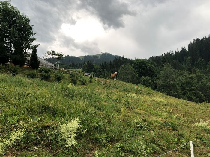 Horse Alpen
