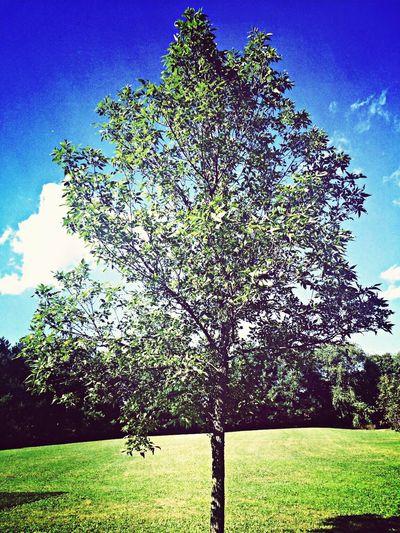Tree Enjoying Life Sunny Day beautiful weather!?