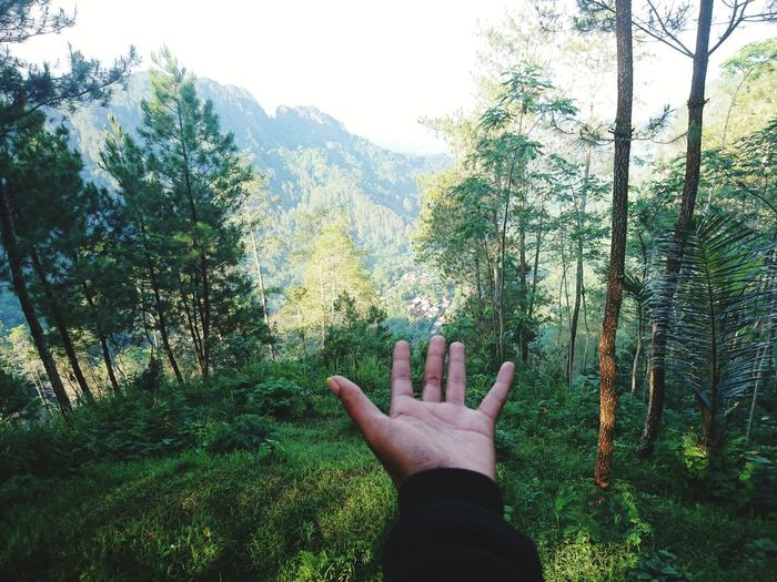 Low section of person hand on pine trees in forest