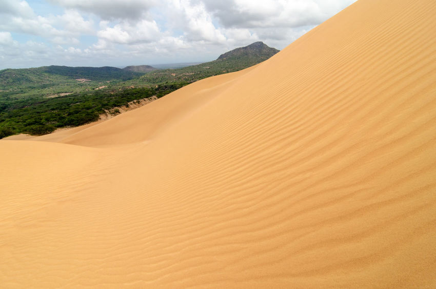 Ripples on a sand dune with a green forest in the background Adventure Background Barren Colombia Day Desert Desolate Drought Dune Dunes Laguajira Landscape Macuira National Park Nature Nazareth Outdoors Park Sand Summer Sunlight Tourism Travel Tree Wave