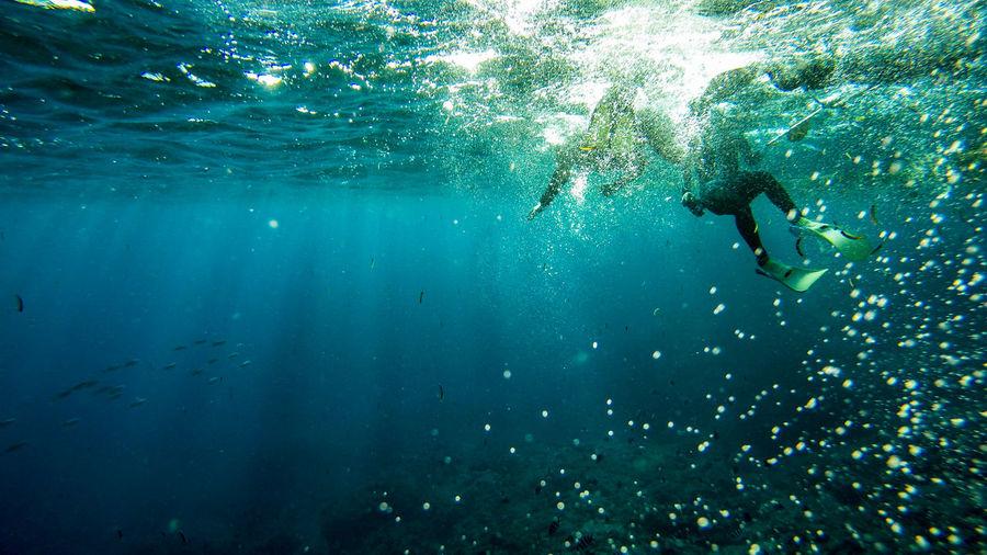 Underwater view of fish swimming in sea