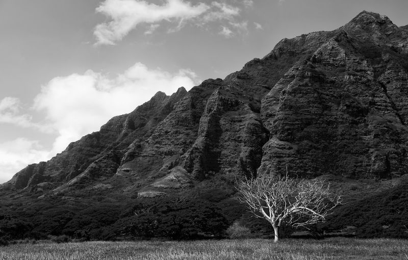 Hawaii Oahu, Hawaii Beauty In Nature Kualoa Landscape Rock Formation Sky Tree