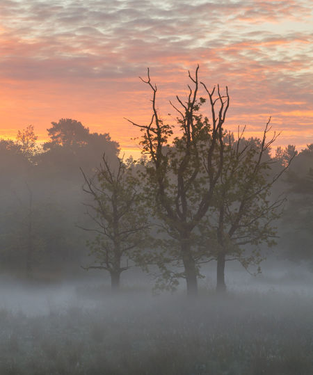 Beautiful foggy morning with great colors in the sky. Colorful Sunrise Netherlands Beauty In Nature Branch Dutch Dutch Landscape Fog Intimate Landscape Landscape Mist Nature No People Noord Brabant North Brabant Outdoors Peaceful Sunrise Tranquil Scene Tranquility Tree