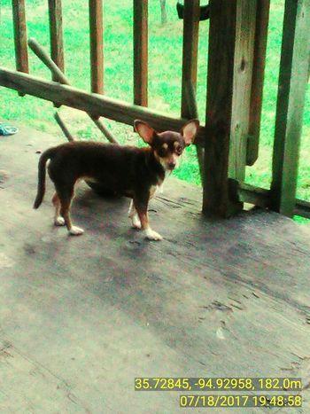 One Animal Pets Dog Outdoors Standing Animal EyeEm Selects EyeEmNewHere