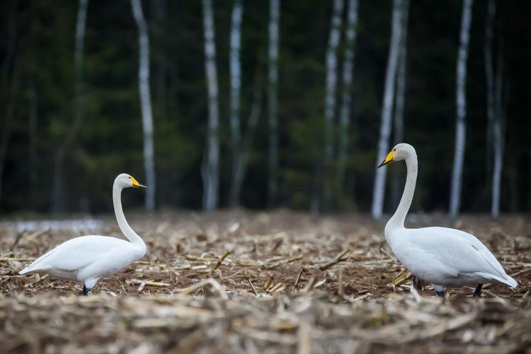 Birds on a land