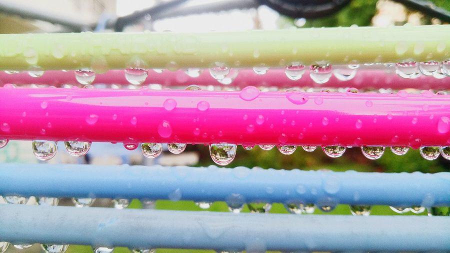 Close-up of water drops on rainy season