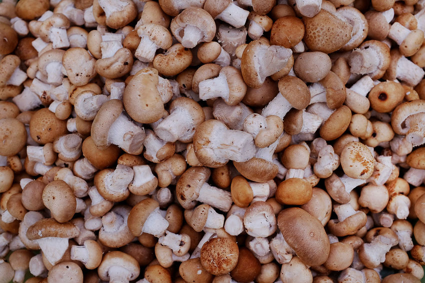 Chiang Mai | Thailand Close-up Food Healthy Eating Market Mushroom Street Market In Thailand
