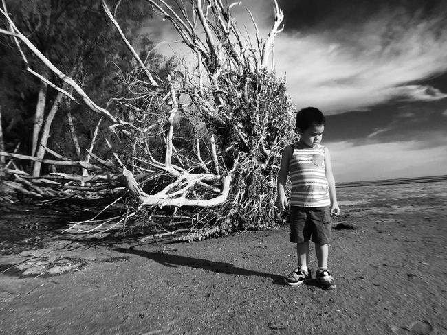 Dead Plant Dead Tree Check This Out Hanging Out Hello World Enjoying Life Taking Photos Blackandwhite Telling Stories Differently Summerfield Puerto Rico Tampa Skyway Bridge