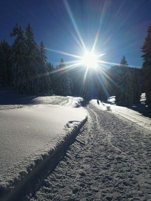 Just another skiing day. Snow Sunlight Cold Temperature Winter Nature Landscape Powder Snow Lens Flare