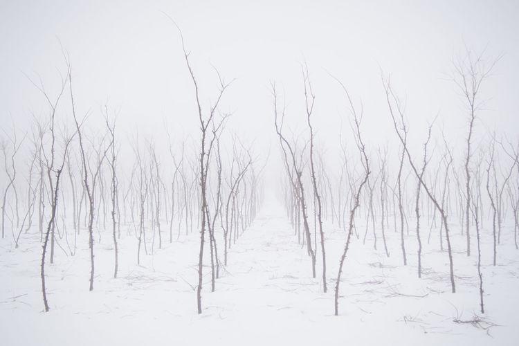 Hokkaido,Japan Iwamizawa Nature Photography Landscape_photography Monochrome Simplicity 北海道 岩見沢 OLYMPUS PEN Lite E-PL6 Olympus