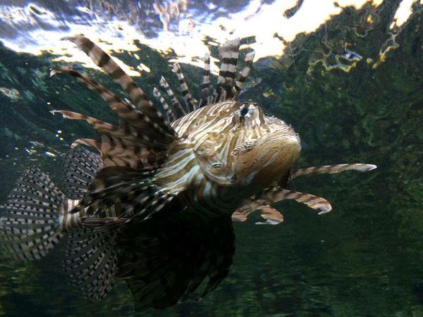 Pesce Pesci Fish Fishing Sommergefühle EyeEm Nature Lover EyeEmNewHere