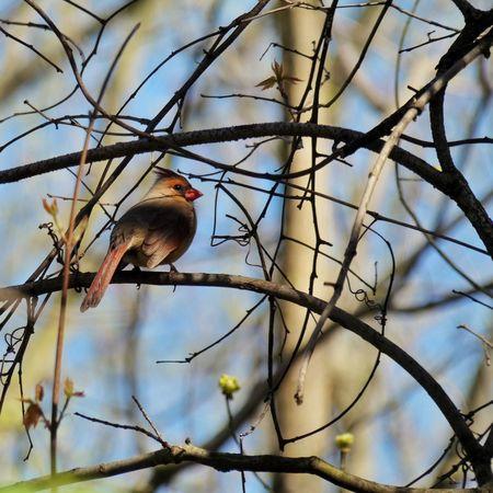 Panasonic Lumix DMC-FZ80 Tree Animal Wildlife Branch Bird Low Angle View