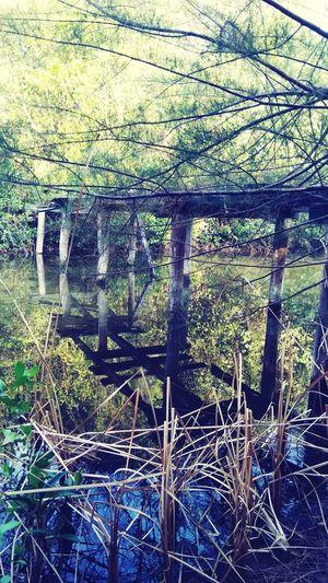 wooden bridge Water Swamp Backgrounds Full Frame Tree Pattern Close-up Fishing Fishing Pole