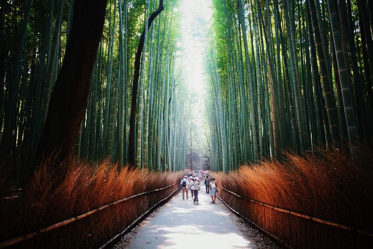Kyoto Arashiyama Japan Photography Feel The Journey
