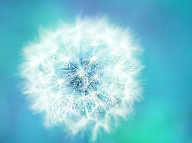 綿毛♡ Nature Beautiful Macro Puffball