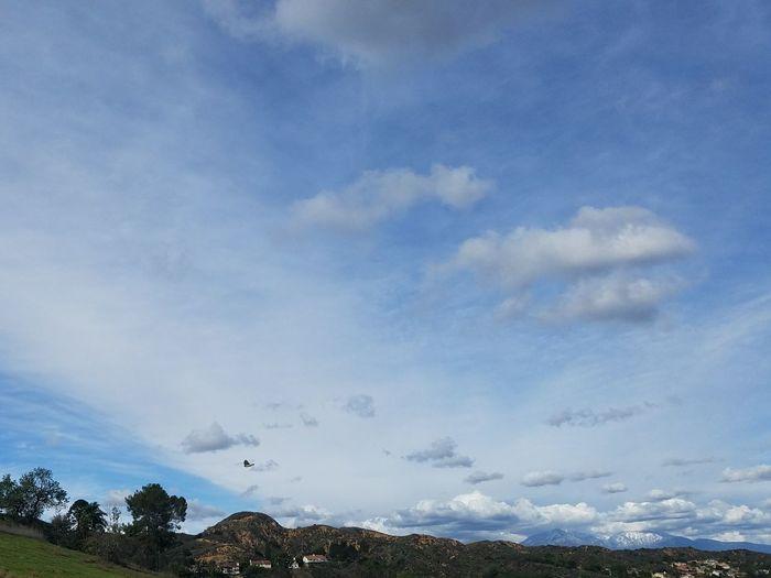 Bird Sky Blue Clouds