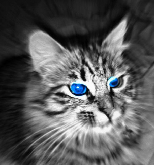 Cute Cats Cats Of EyeEm OpenEditCreativ Animal_collection Beautiful Animals
