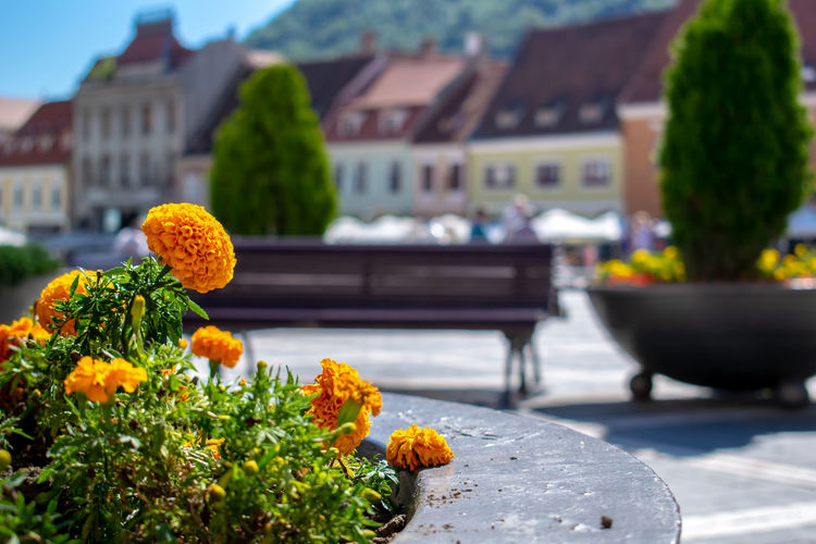 Close-up of flowering plants in city