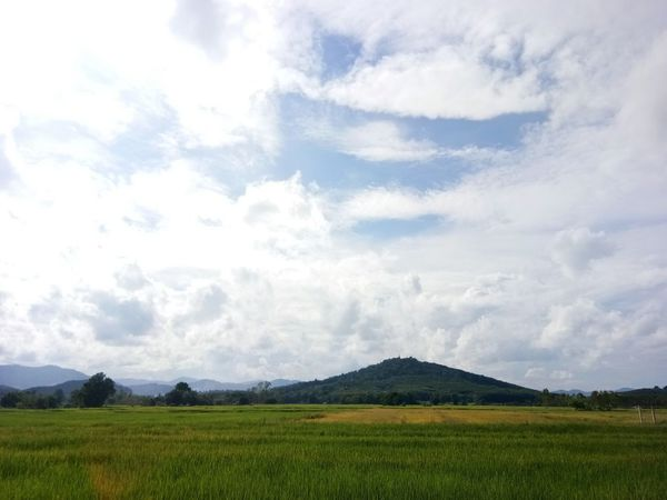 Agriculture Field Cloud - Sky Nature Rural Scene Blue Sky Landscape No People Tree Day Outdoors Freshness