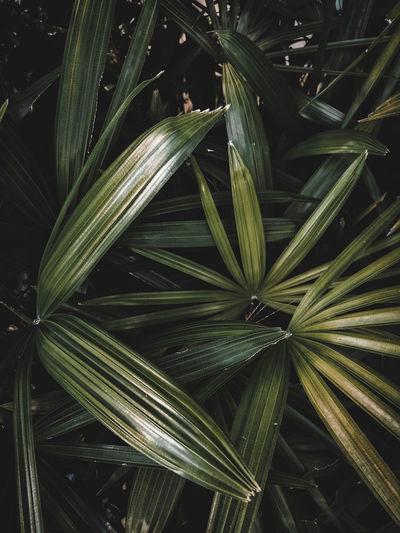 Full frame shot of palm leaves on field