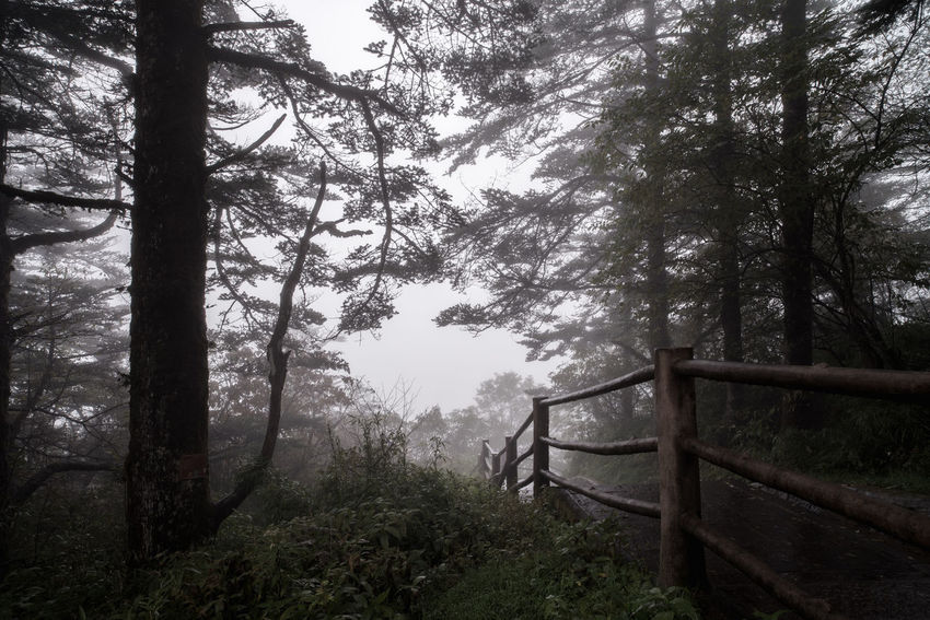 A trail in foggy forest in mountain. Hiking Path Beauty In Nature Fog Forest Landscape Mountain Nature No People Outdoors Railing Scenics Trail Tranquil Scene Tranquility Tree Tree Trunk