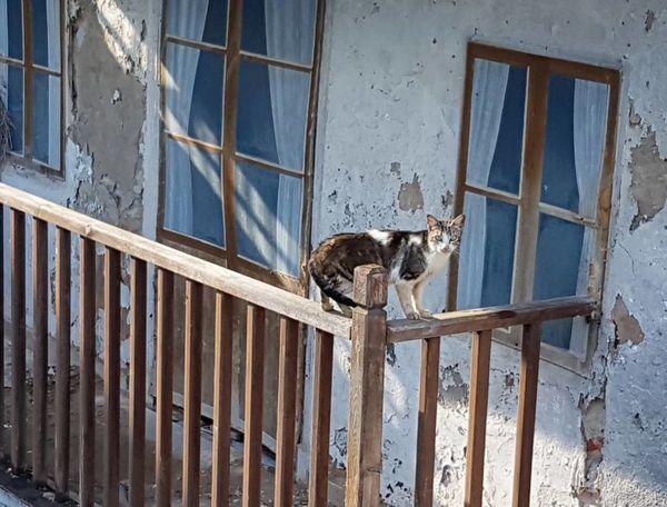 Gatos En La Ventana Movilgrafía Cat Photography