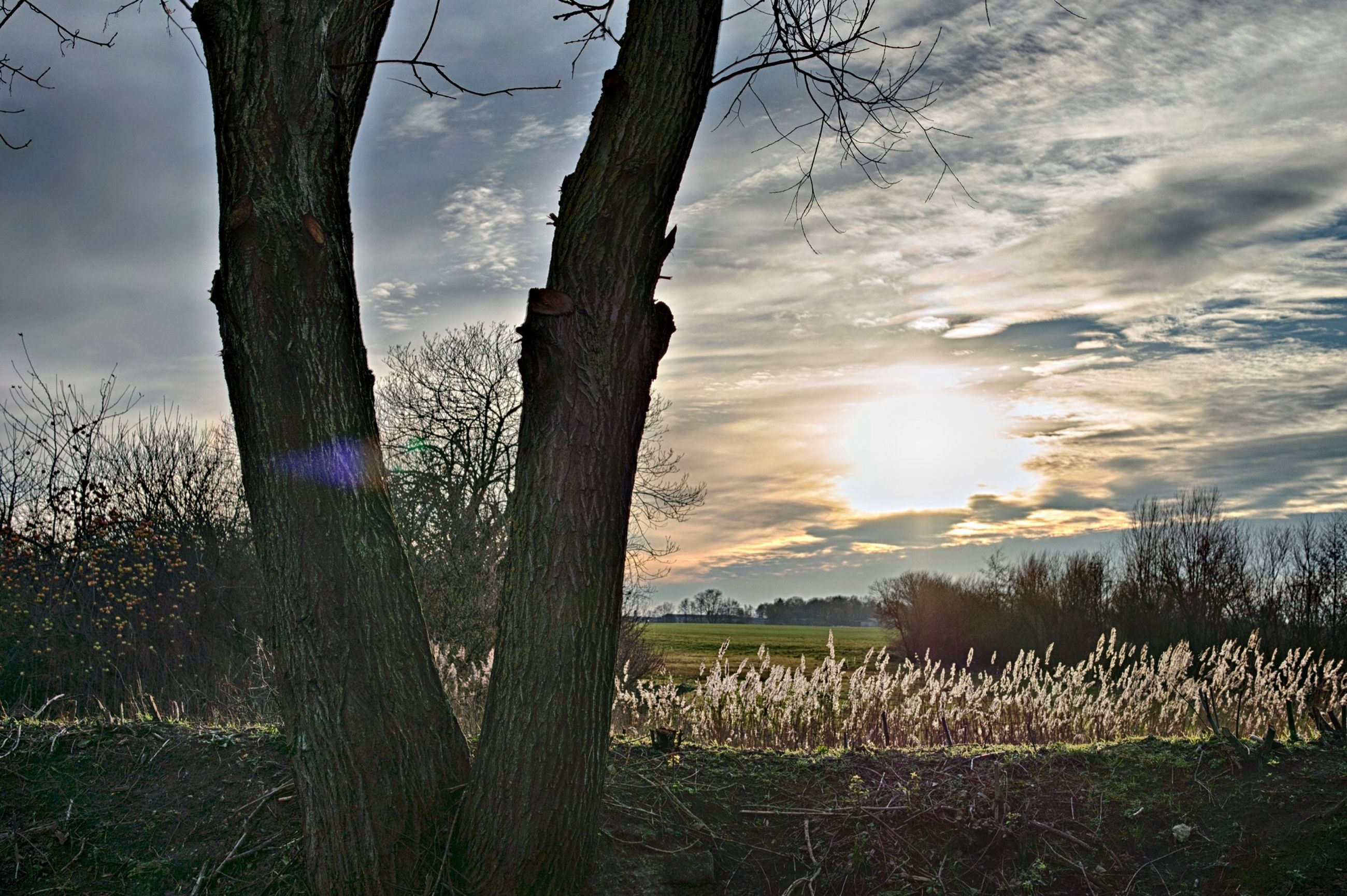 sky, tranquility, field, tranquil scene, tree, grass, nature, scenics, beauty in nature, landscape, sun, growth, bare tree, sunset, cloud - sky, tree trunk, branch, sunlight, plant, idyllic