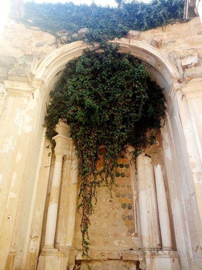 chiesa di Sant'Ignazio, Mazara del Vallo Architectural Column History Architecture Built Structure Historic Place Of Worship Spirituality Catholicism Church Christianity Religion