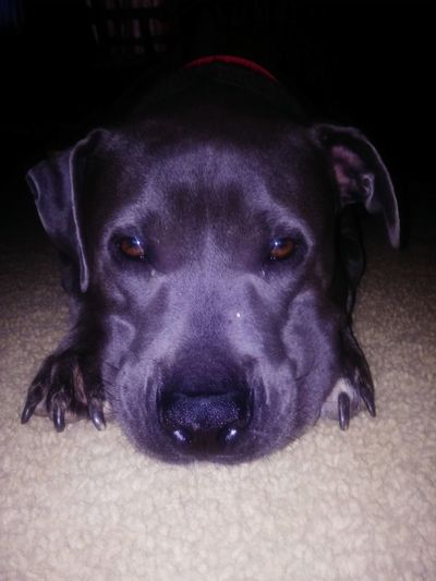 Dogs Of EyeEm Dogslife Worlddog Doglover Dogs World Dog❤ Dogs Dog Love DogLove Dog Life