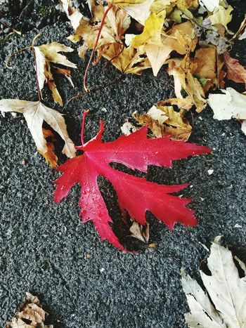 Fall at its best Leaf High Angle View Close-up Fallen Leaf Vein Autumn Autumn Collection Leaves Season  Fallen Leaf Change Blooming