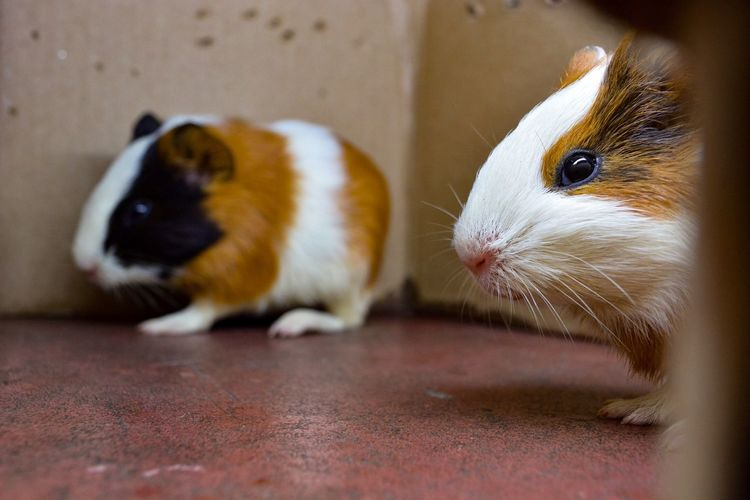 Two Is Better Than One Hamster Love Couple Cute Cute Pets Colours Happy Animal Love Candid Domestic Animals