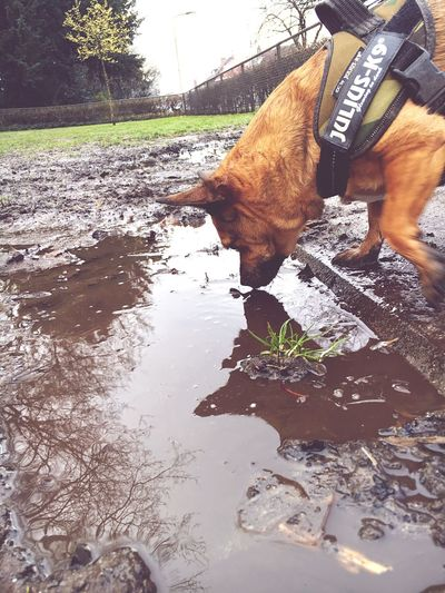 Dog My Dog Reflection Reflections Reflection_collection Reflected Glory Dogs Dog Love Dog❤ Dogslife Drinking Sniffing Sniffing Around Nature Pet Pets Pets Corner Pet Photography  Petstagram PracticeMakesPerfect Practicing Check This Out Hello World Welcomeweekly Showcase March