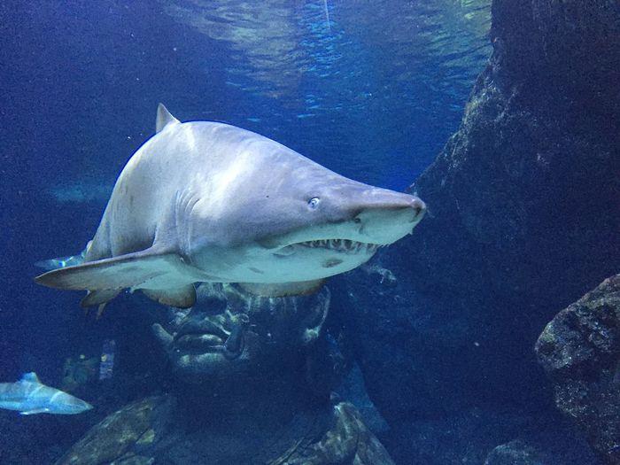 Baby shark doo doo doo doo Shark Animal Themes Nature