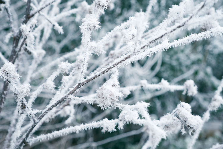 Beauty In Nature Branch Close-up Cold Temperature Day Frost Frozen Ice Ice Crystal Nature No People Outdoors Snow Snowflake Tree Weather White Color Winter