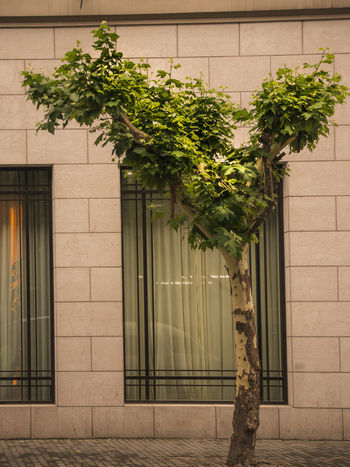 Architecture Building Building Exterior Built Structure City Day Door Entrance Green Color Growth House Leaf Nature No People Outdoors Plant Plant Part Tree Wall - Building Feature Window The Traveler - 2018 EyeEm Awards