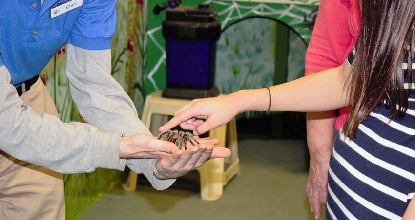 Petting a tarantula spider Animals Close-up Day Human Hand Insects  Petting Animals Spider Tarantula
