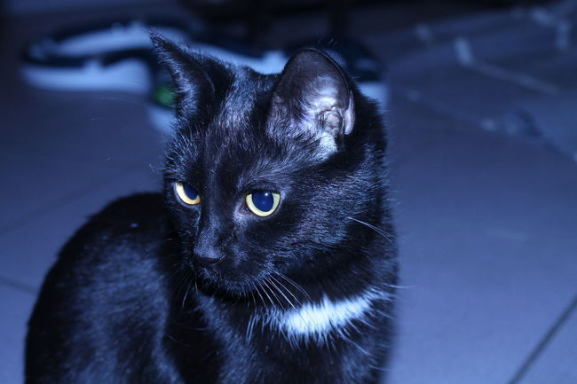Animal Themes Black Color Cats Of EyeEm Domestic Animals Domestic Cat Indoors  My Cat No People One Animal Pets Portrait Yellow Eyes Premium Collection Canon Eos 1100 D