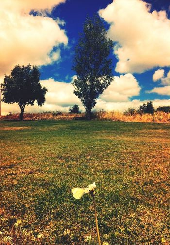 One Love Nature Enjoying Nature EyeEm Nature Lover EyeEm Best Shots