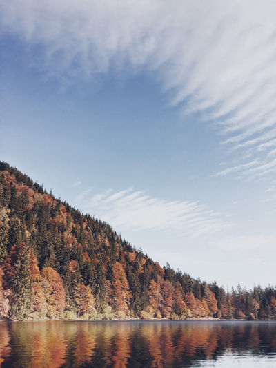 Water Tree Sky
