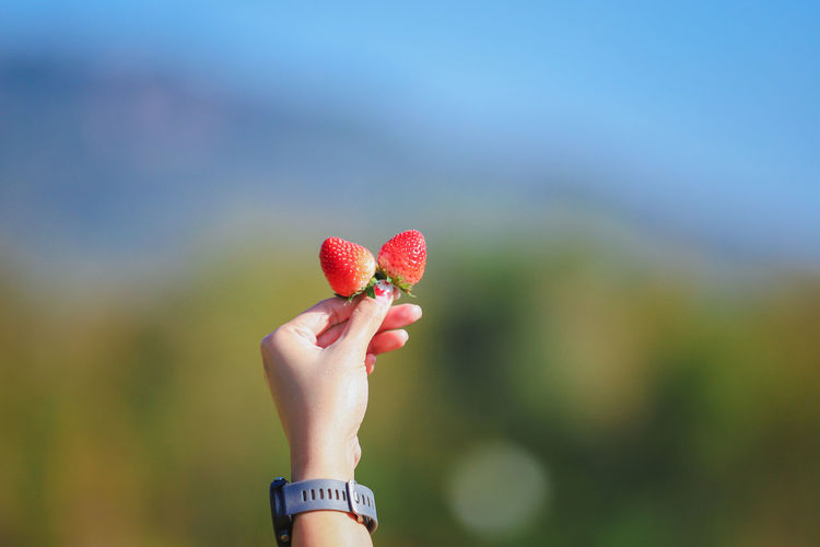 Cropped image of hand holding red berries