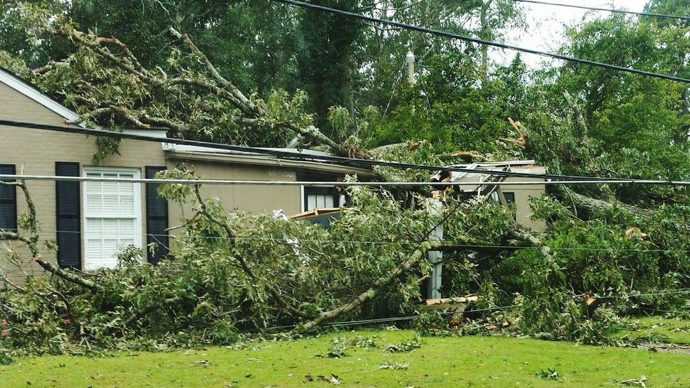 • Hurricane Michael • Tree Branch Architecture Building Exterior Grass Built Structure Plant Green Color