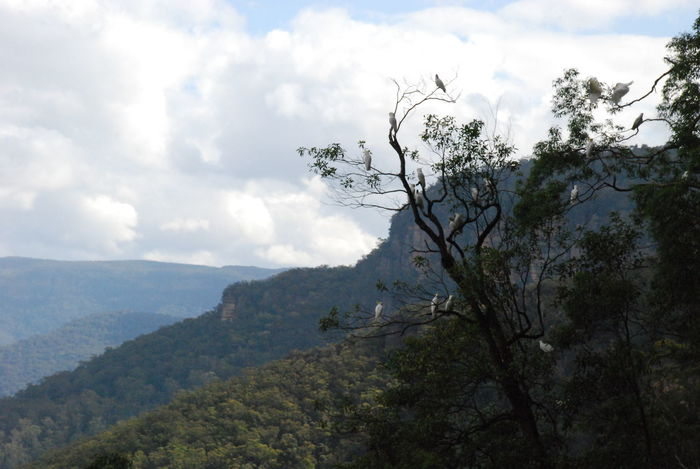 Photos of Blue Mountains National Park, Australia 2012 Beauty In Nature Branch Cloud - Sky Day Landscape Mountain Nature No People Outdoors Scenics Sky Tranquil Scene Tranquility Tree